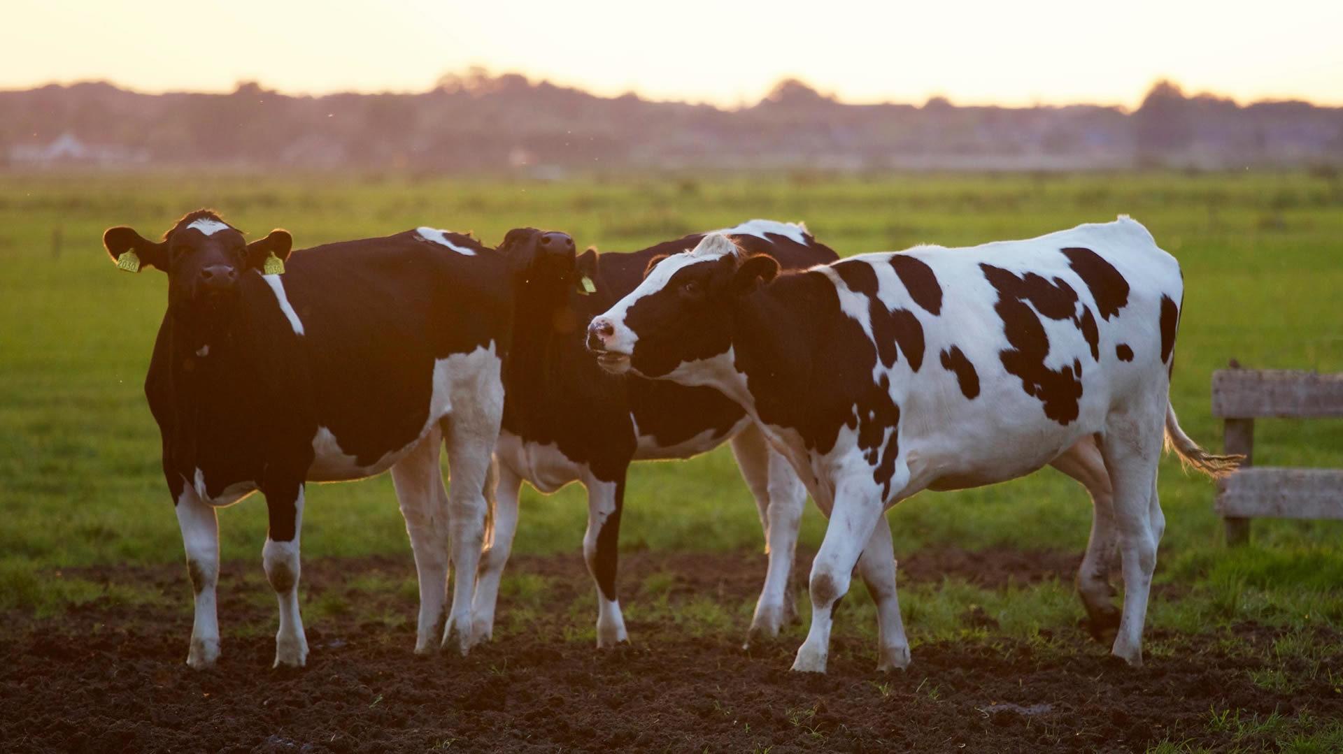 Taller teórico práctico de ecografía reproductiva en bovinos